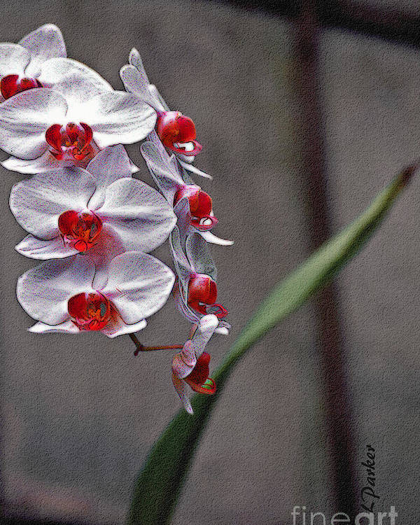 Flower Poster featuring the photograph Orchid In Window by Linda Parker