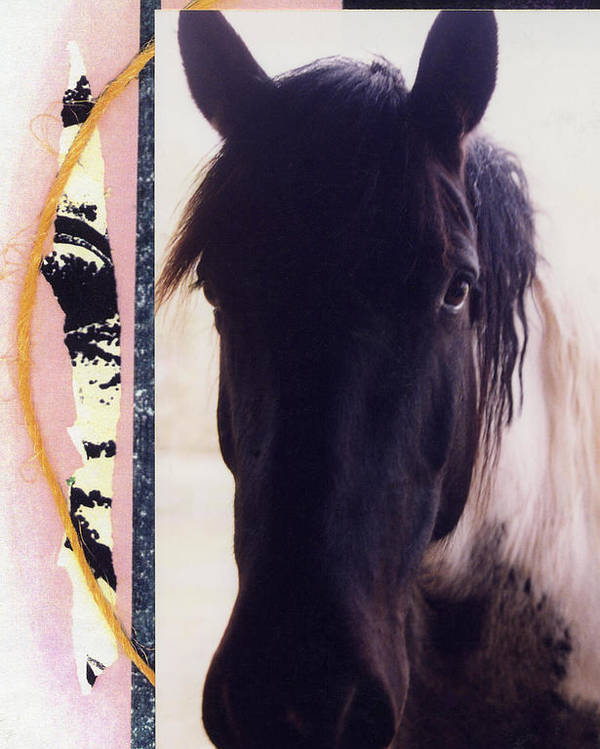 Horse Poster featuring the photograph Oreo by Mary Ann Leitch
