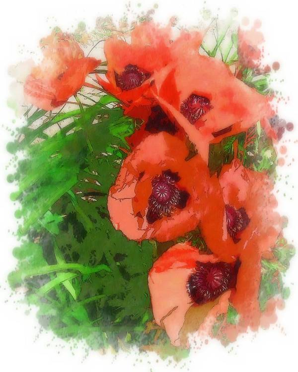 Flora Poster featuring the photograph Partial To Poppies by Lorraine Keil