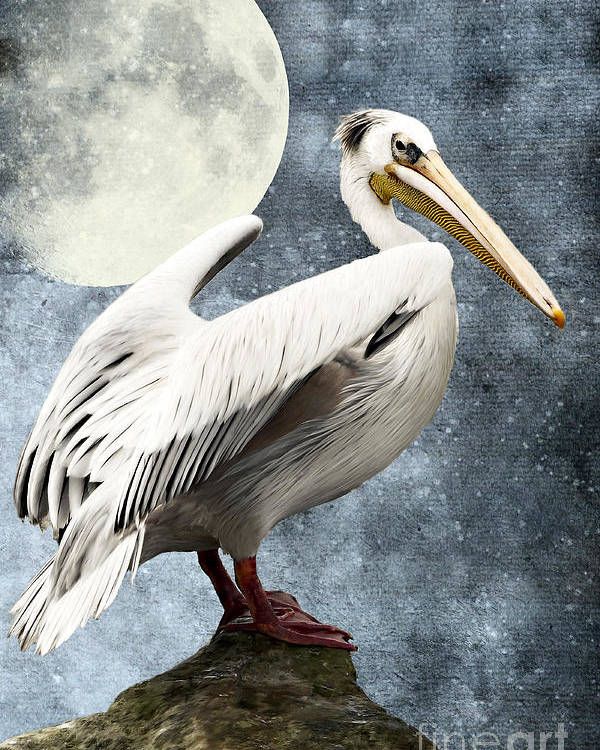 Pelican Poster featuring the digital art Pelican Night by Angela Doelling AD DESIGN Photo and PhotoArt