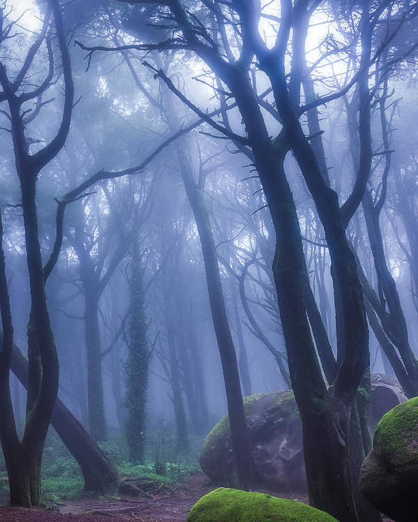Nature Poster featuring the photograph Peninha Magical Forrest In Sintra Portugal by Fabs Fabian