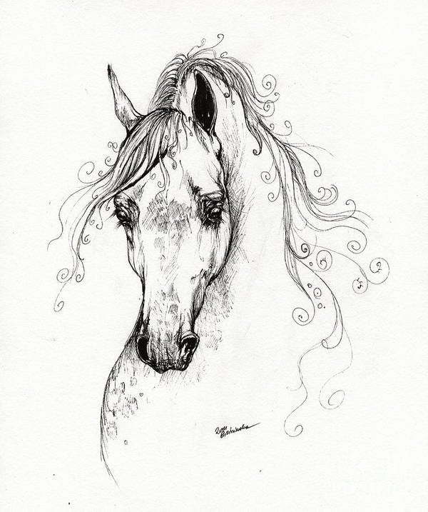 Fairytale Poster featuring the drawing Piaff Polish Arabian Horse Drawing by Angel Tarantella