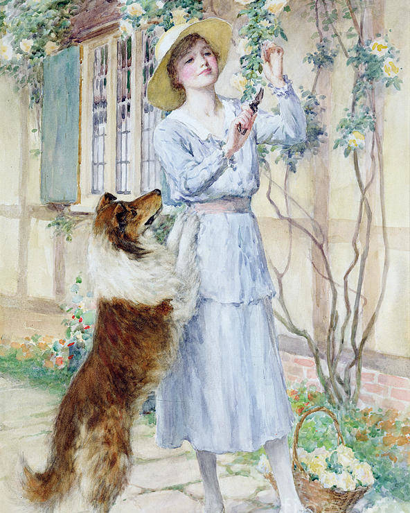Rose Poster featuring the painting Picking Roses by William Henry Margetson