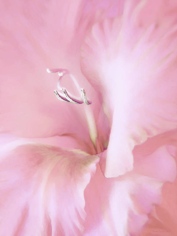 Gladiola Poster featuring the photograph Pink Gladiolus Flower by Jennie Marie Schell