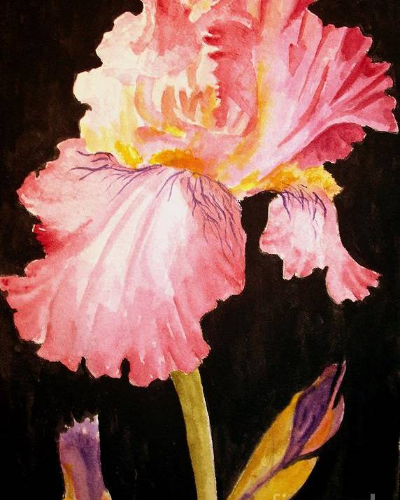 Iris Poster featuring the painting Pink Iris by Carol Grimes