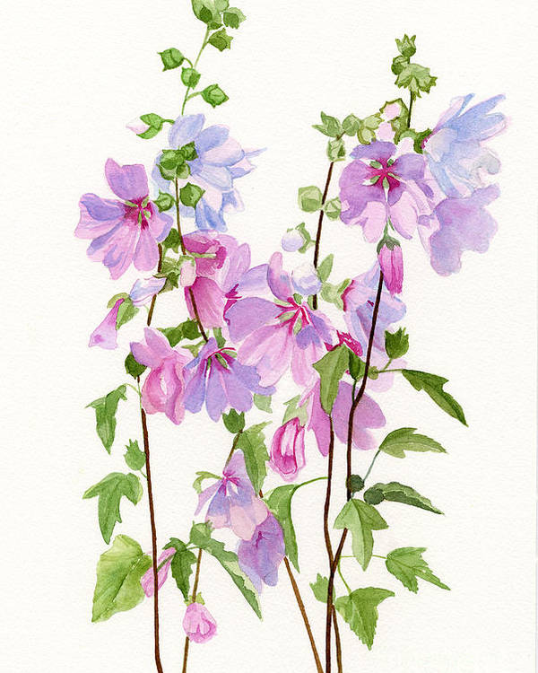 Pink Poster featuring the painting Pink Mallow Flowers by Sharon Freeman