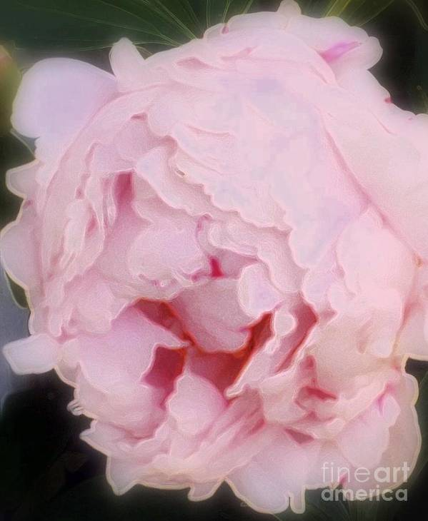 Peony Poster featuring the photograph Pink Pink by Kathleen Struckle