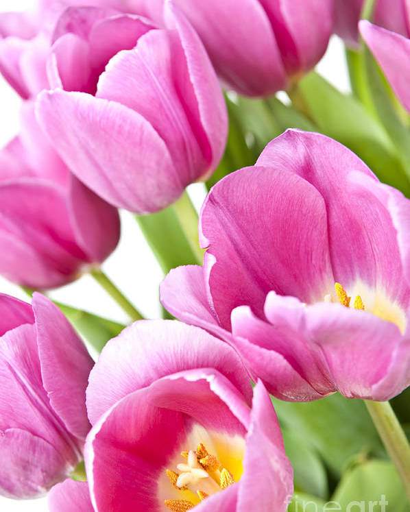 Tulips Poster featuring the photograph Pink Tulips by Elena Elisseeva
