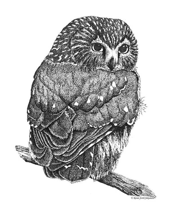 Owl Poster featuring the drawing Pointillism Sawhet Owl by Renee Forth-Fukumoto