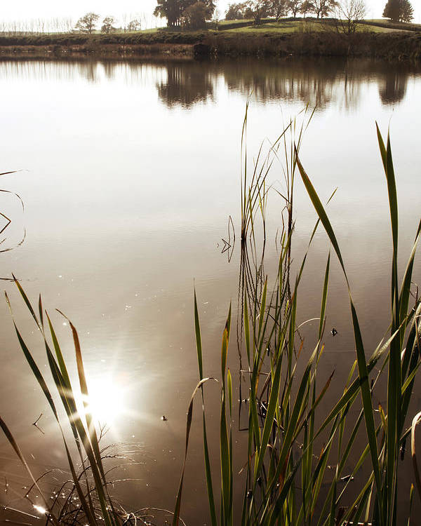 Water Poster featuring the photograph Pond by Les Cunliffe