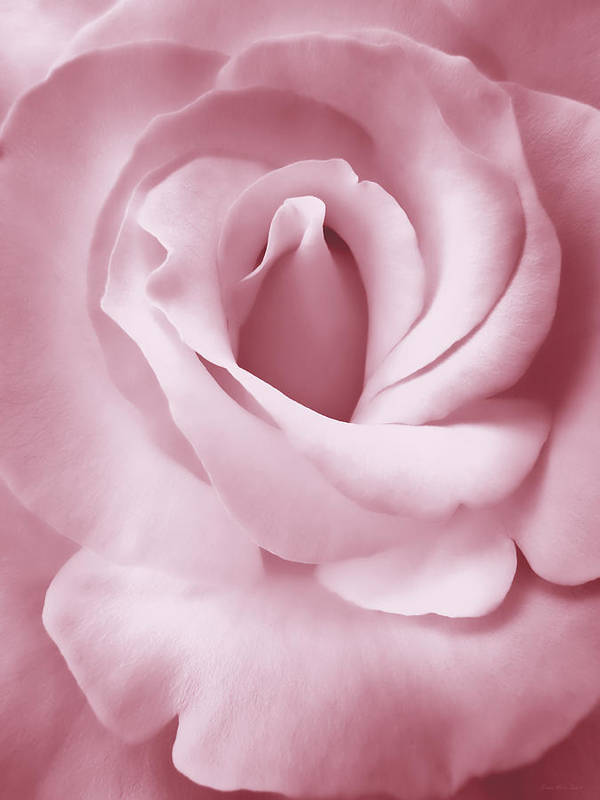 Rose Poster featuring the photograph Porcelain Pink Rose Flower by Jennie Marie Schell