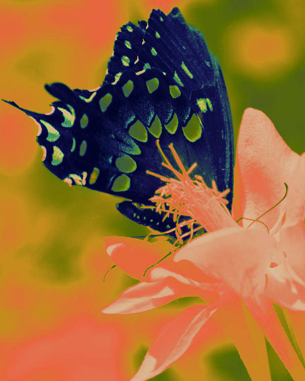 Multi Color Poster featuring the digital art Psychadelic Butterflys by Chanelle Sheridan