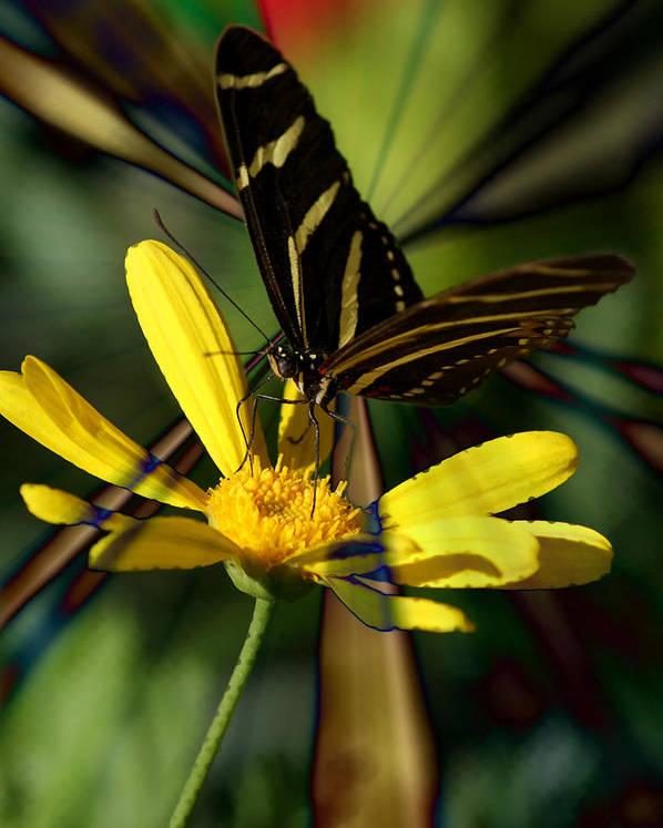 Butterfly Poster featuring the digital art Psychadelic Zebra Butterfly by Chanelle Sheridan