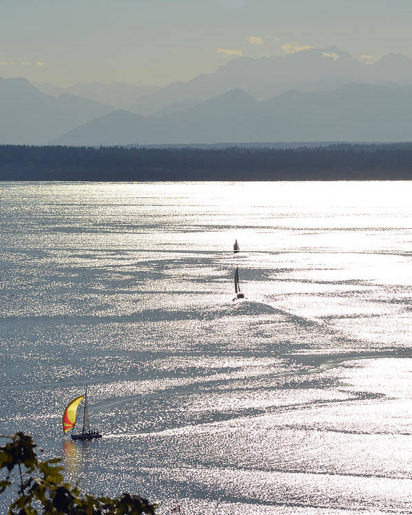 Ocean Poster featuring the photograph Puget Sound 2014 by Carol Eliassen