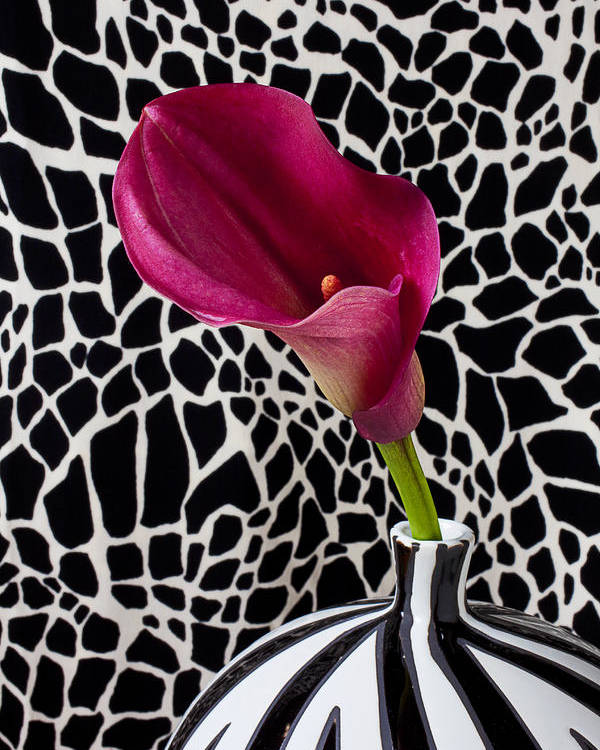 Purple Calla Lily Poster featuring the photograph Purple Calla Lily by Garry Gay