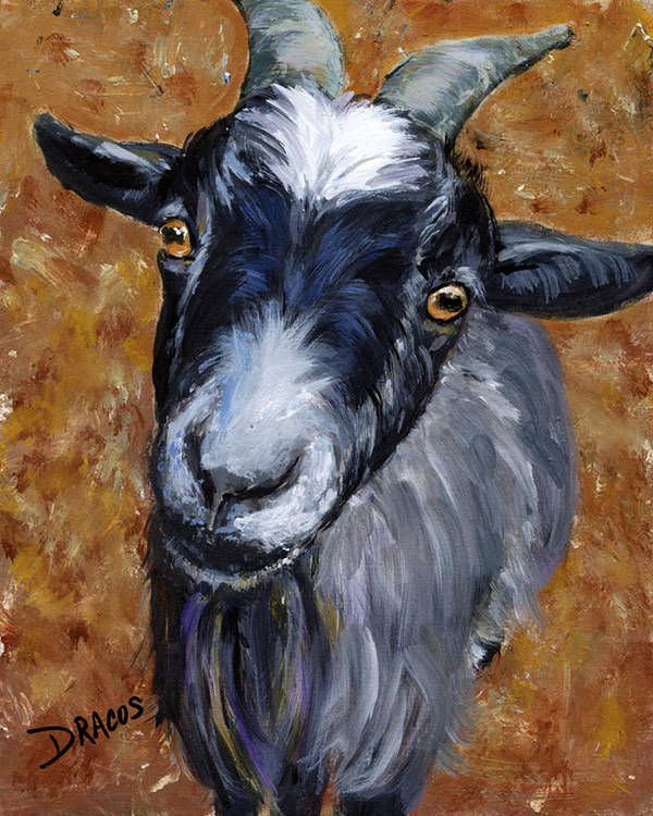 Pygmy Goat Poster featuring the painting Pygmy Goat Looking Up by Dottie Dracos