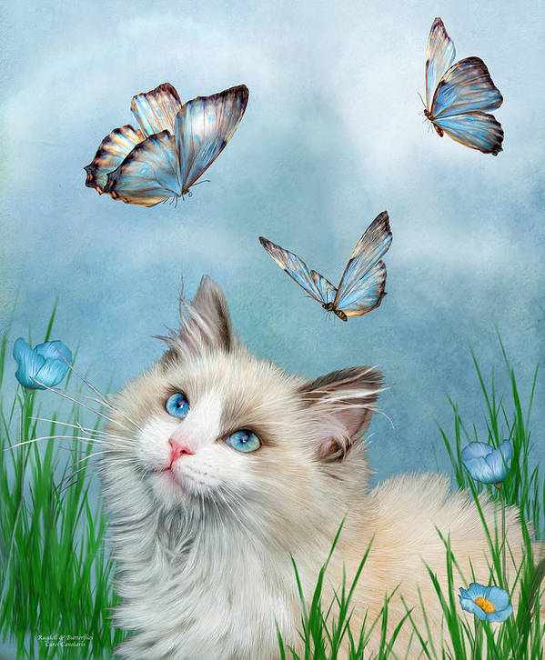 Kitty Poster featuring the mixed media Ragdoll Kitty And Butterflies by Carol Cavalaris
