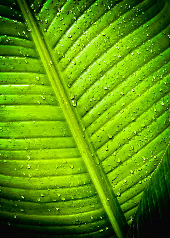 Rain Poster featuring the photograph Raindrops On Green Leaf by Joe Carini