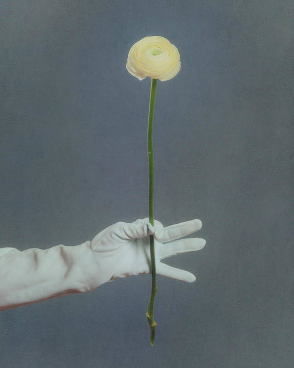 Flower Poster featuring the photograph Ranunculus by Joana Kruse