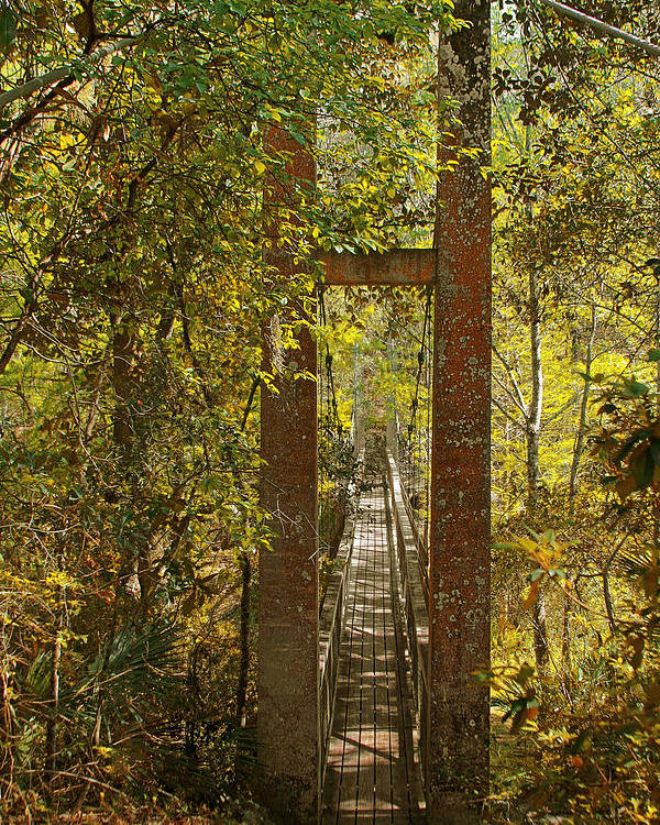Swinging Poster featuring the photograph Ravine Gardens State Park In Palatka Fl by Christine Till