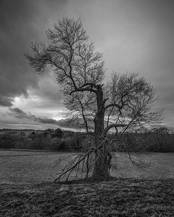 Trees Poster featuring the photograph Reaching For The Light Vertical by Jason Lanier