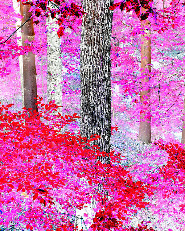 Dreamscape Red Forest Poster featuring the photograph Red Forest by JCYoung MacroXscape