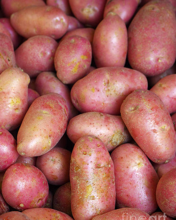 Farm Poster featuring the photograph Red Potatoes by Carlos Caetano
