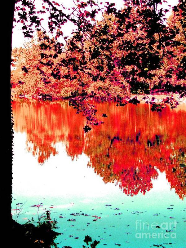 Tree Poster featuring the photograph Reflection In Red by Tahlula Arts