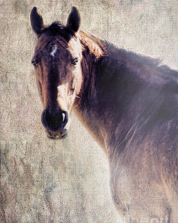 Horse Poster featuring the photograph Reliability by Betty LaRue
