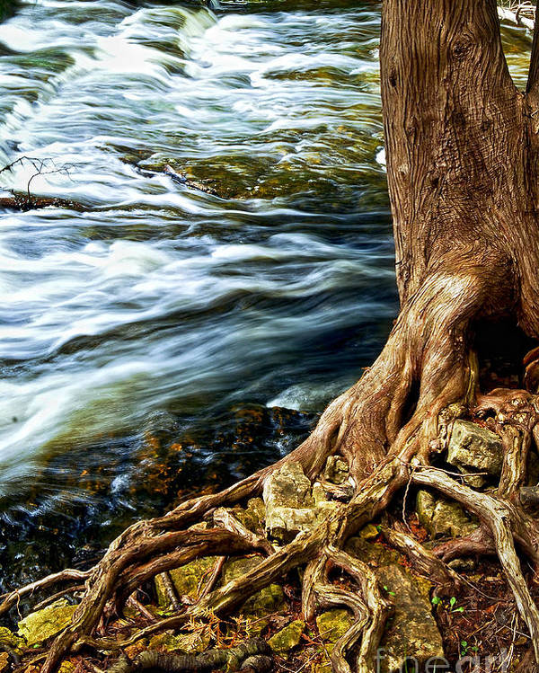 Trunk Poster featuring the photograph River Through Woods by Elena Elisseeva