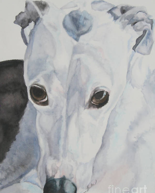 Whippet Poster featuring the painting Riveted by Susan Herber