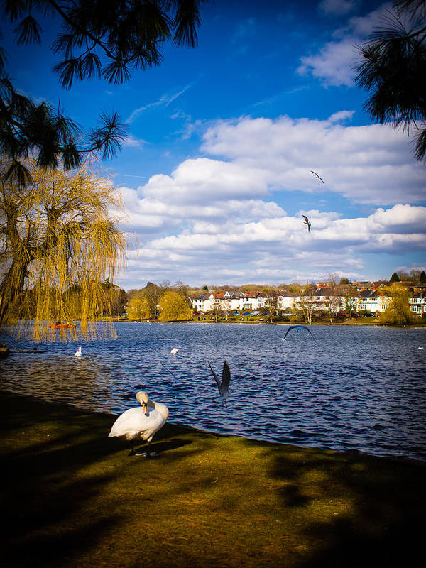Beak Poster featuring the photograph Roath Park Lake by Mark Llewellyn