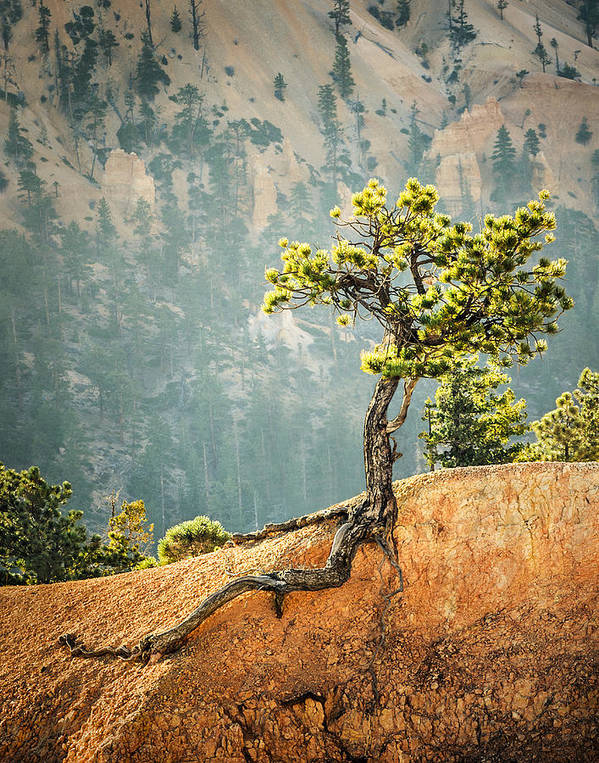 Landscapes Poster featuring the photograph Roots Rock by Nancy Strahinic