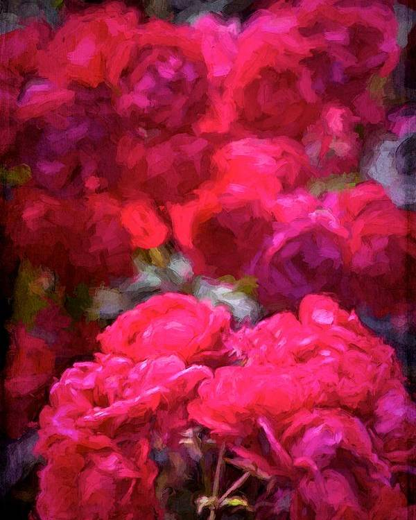 Floral Poster featuring the photograph Rose 134 by Pamela Cooper