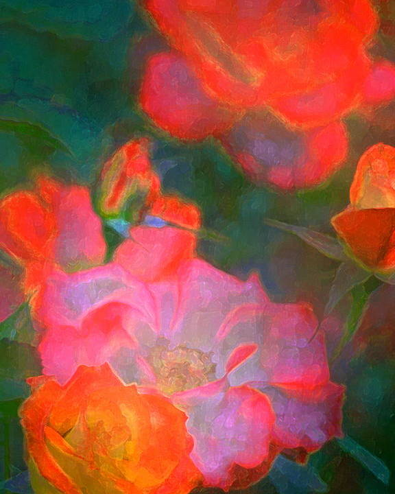 Floral Poster featuring the photograph Rose 187 by Pamela Cooper