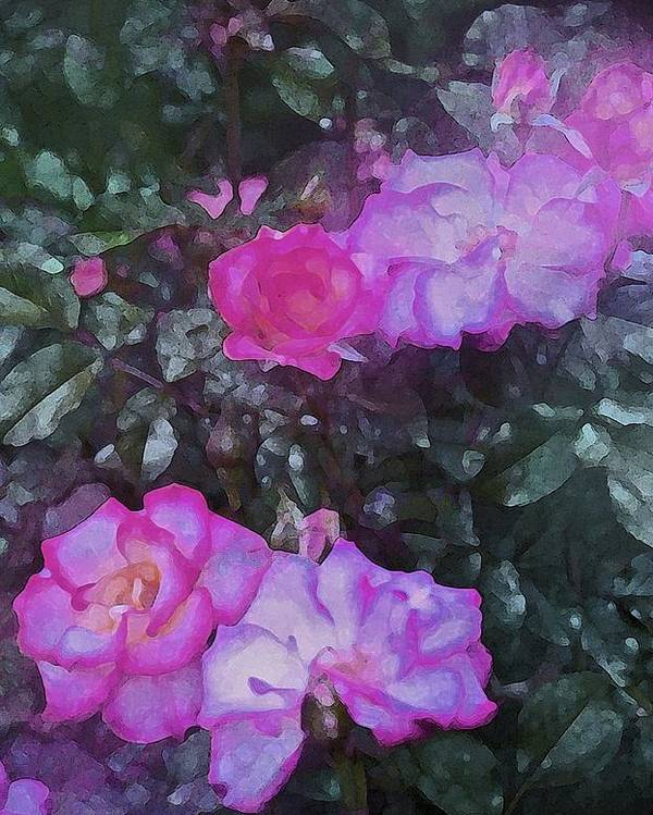 Floral Poster featuring the photograph Rose 189 by Pamela Cooper