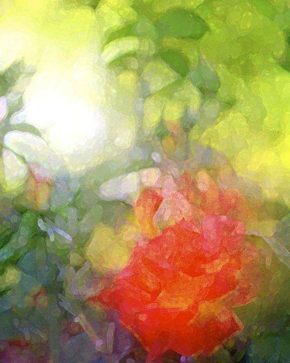 Floral Poster featuring the photograph Rose 190 by Pamela Cooper