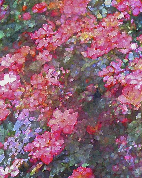 Floral Poster featuring the photograph Rose 199 by Pamela Cooper