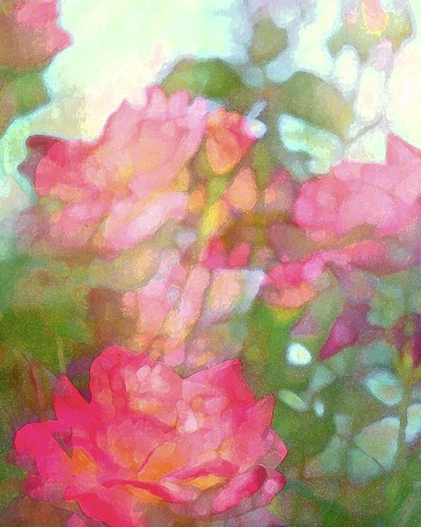 Floral Poster featuring the photograph Rose 200 by Pamela Cooper