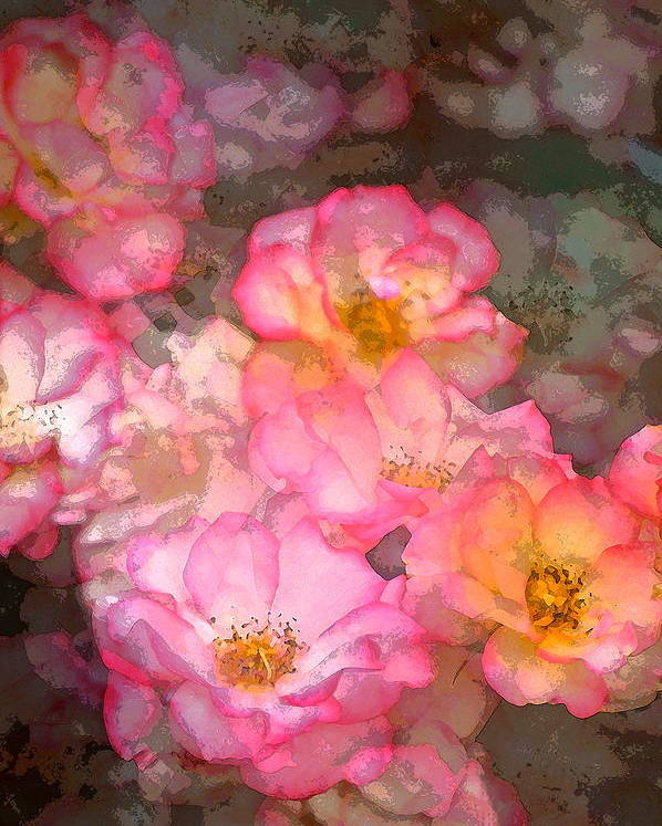 Floral Poster featuring the photograph Rose 210 by Pamela Cooper