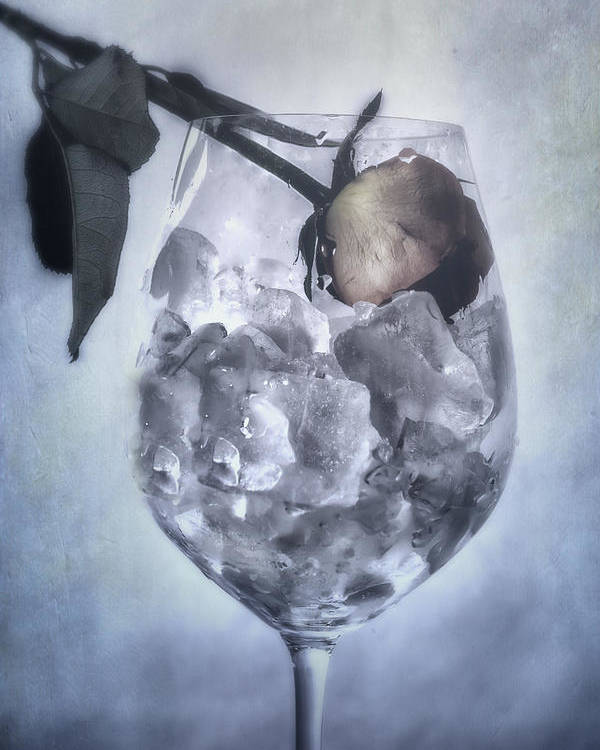 Rose Poster featuring the photograph Rose On The Rocks by Joana Kruse