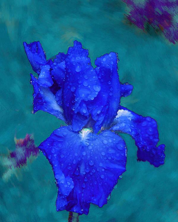 Blue Iris Poster featuring the painting Royal Blue Iris by Viktor Savchenko