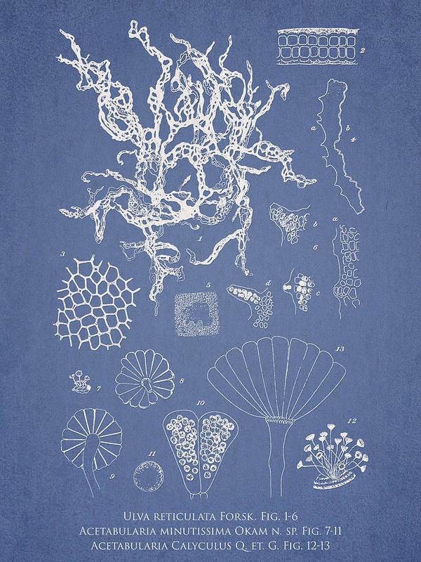 Algae Poster featuring the digital art Salwater Algae by Aged Pixel