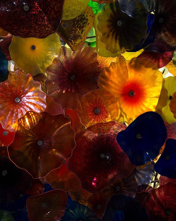 Sea Flowers Poster featuring the photograph Sea Flowers And Mermaid Gardens by Georgia Mizuleva