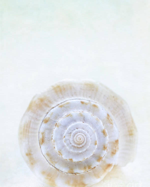 Aquatic Poster featuring the photograph Sea Shell by Stephanie Frey