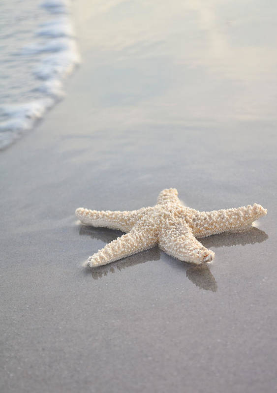 Beach Poster featuring the photograph Sea Star by Samantha Leonetti