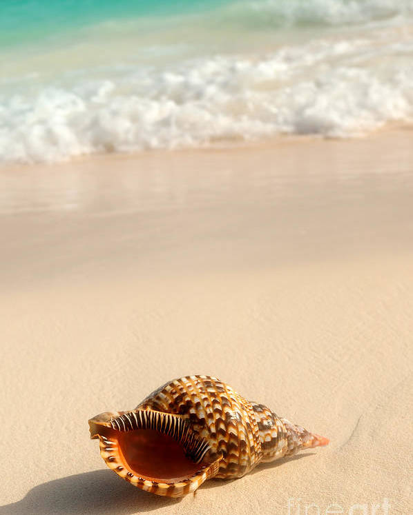 Seashell Poster featuring the photograph Seashell And Ocean Wave by Elena Elisseeva