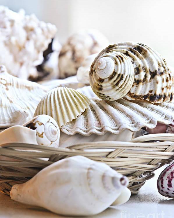 Seashell Poster featuring the photograph Seashells by Elena Elisseeva