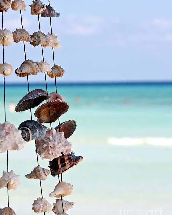 Seashell Poster featuring the photograph Seashells by Sophie Vigneault