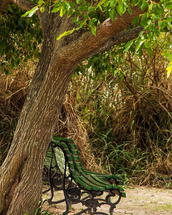 Tree Poster featuring the photograph Secluded Park Benches by Jess Kraft